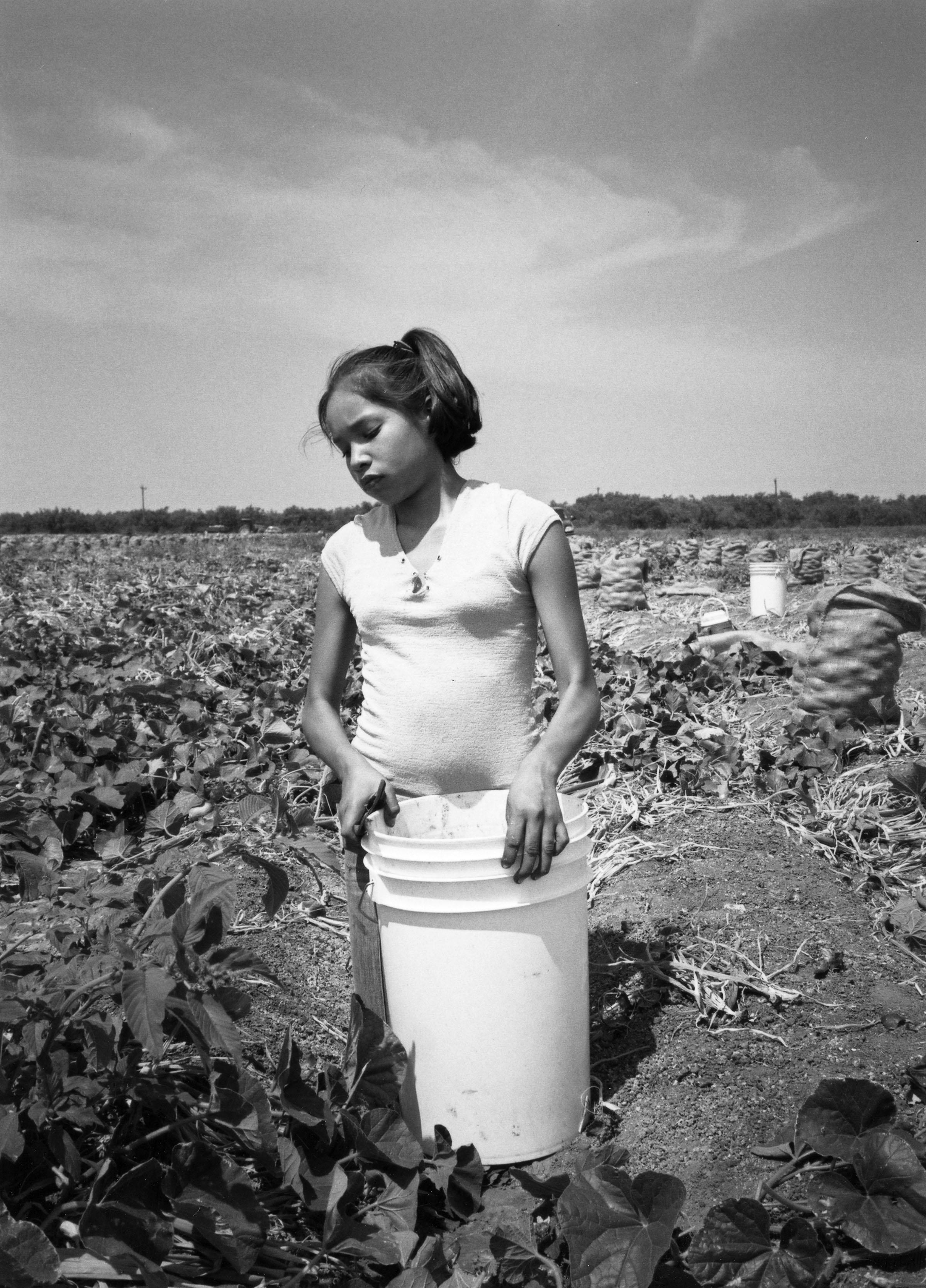 Yesenia, age 12, harvesting onions in South Texas (Photo courtesy of Robin Romano)