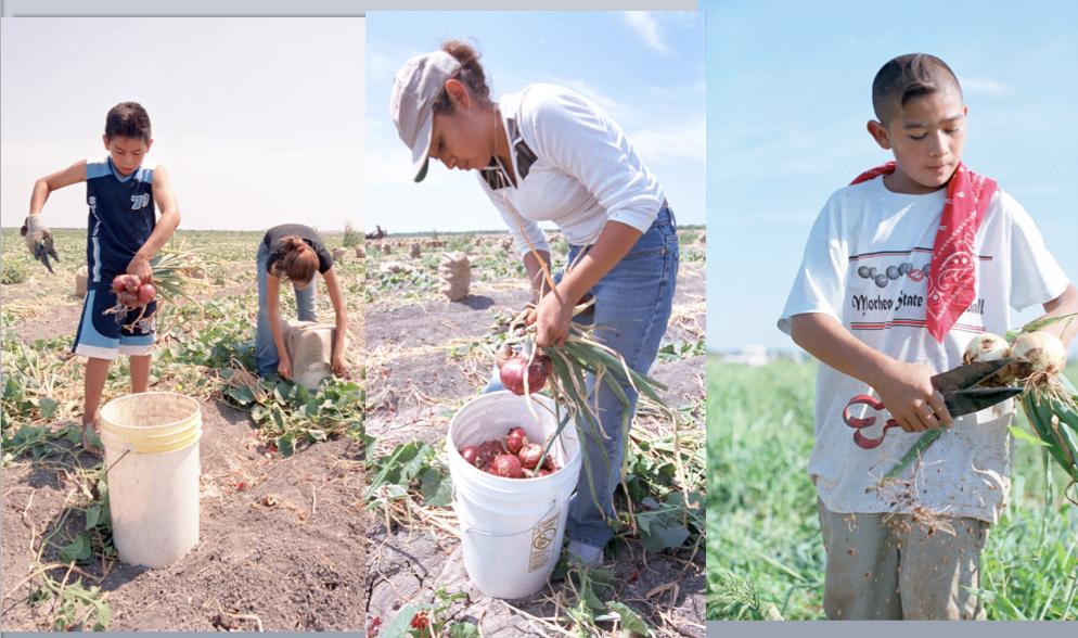 U.S.+Child+Labor