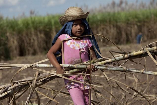 Child sugarcane worker. Photo by Noah Friedman-Rudovsky. Courtesy of Green America.